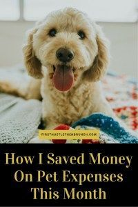 How much money do you spend on your pet each month? When you are paying off debt, saving every penny is very important. Check out this post to find out how I saved $100 on pet expenses this month!
