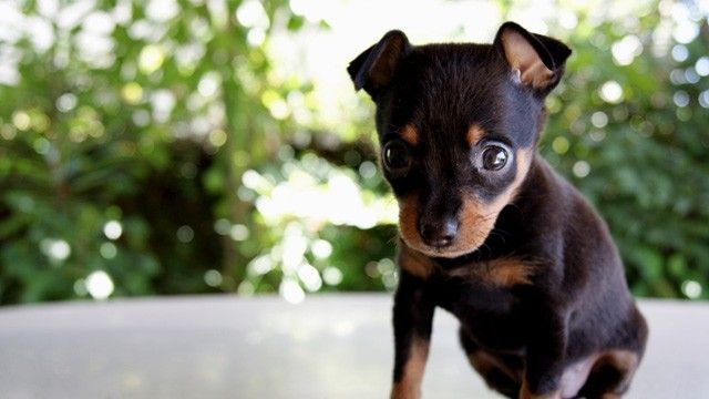 Paar Verkauft Nachbarshund Auf Craigslist Perros Rottweiler Perros Animales
