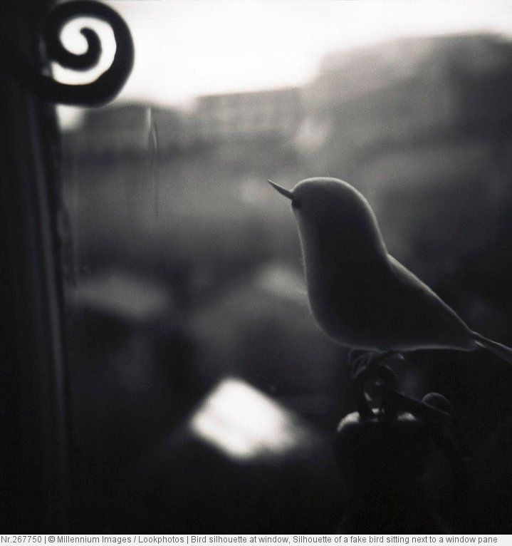 Bird silhouette at window, Silhouette of a fake bird sitting next to a window pane