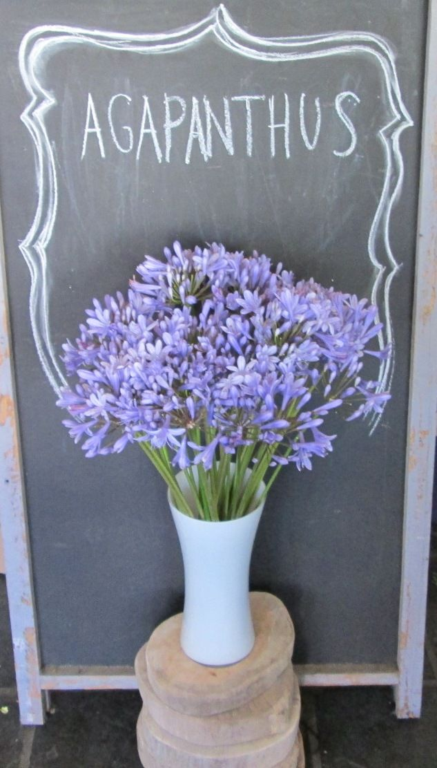 FLOWERS 101: 'Agapanthus' The name is derived from scientific Greek: αγάπη (agape) = love, άνθος (anthos) = flower.