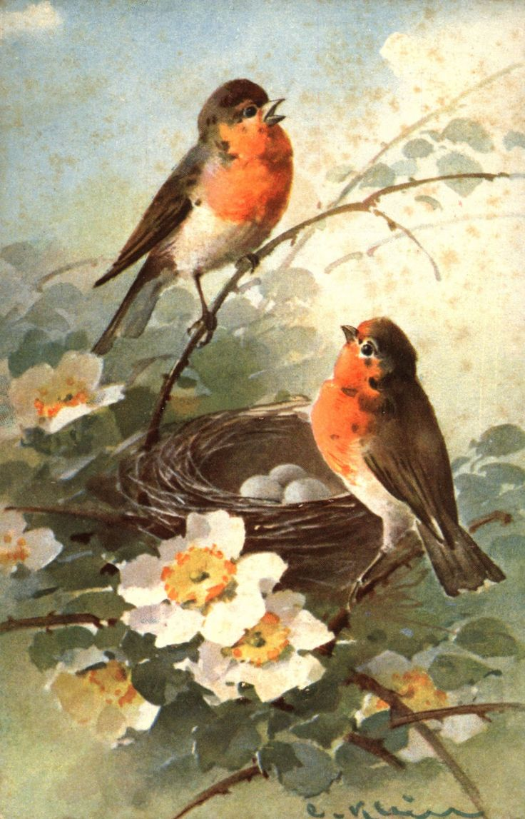 125 best images about victorian birds with flowers on