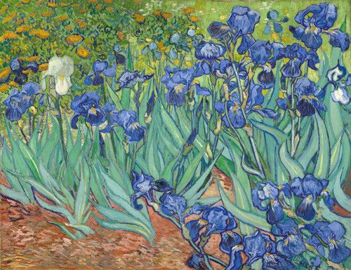 Irises by Vincent Van Gogh. Dutch, Saint-Rémy, France, 1889. Oil on canvas. Vincent van Gogh painted this picture of irises in the final year before his death while living at the asylum at Saint Paul-