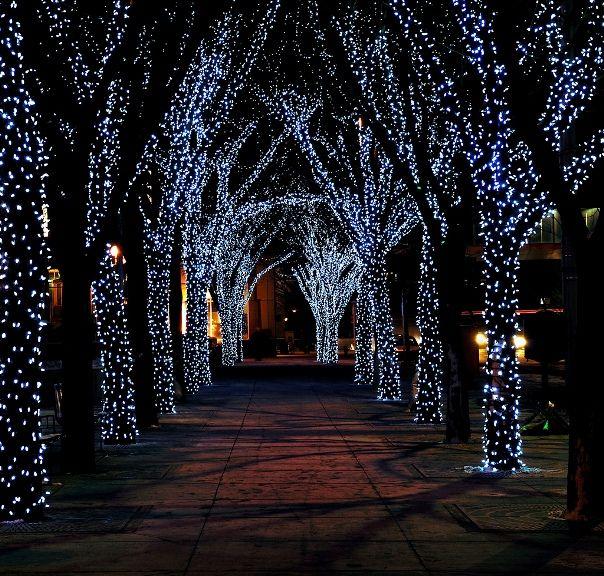o christmas trees - Christmas Tree Pathway Lights