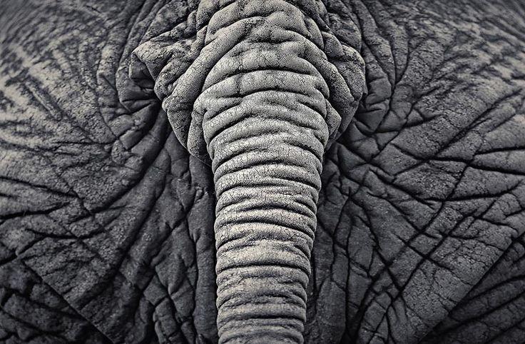Creatures – Les superbes photographies animalières d'Antti Viitala