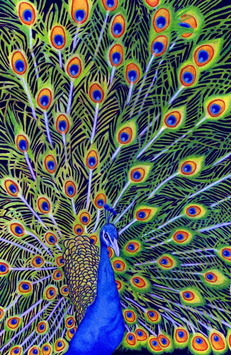 peacock art - Google Search