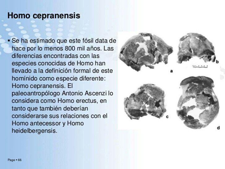 Elhombre de Ceprano(Homo cepranensis) es unaespecieextintaperteneciente al géneroHomo, basada en la parte superior de un cráneo, descubierto en la localidad deCeprano, provincia de Frosinone,Italia. Se calcula que la capacidad craneana de este espécimen podría ser hasta de 1200cc, lo que significa un cerebro claramente mayor que el delHomo ergastery elHomo erectus. Se ha estimado que este fósil data de hace por lo menos entre 800000 y 350000 años.
