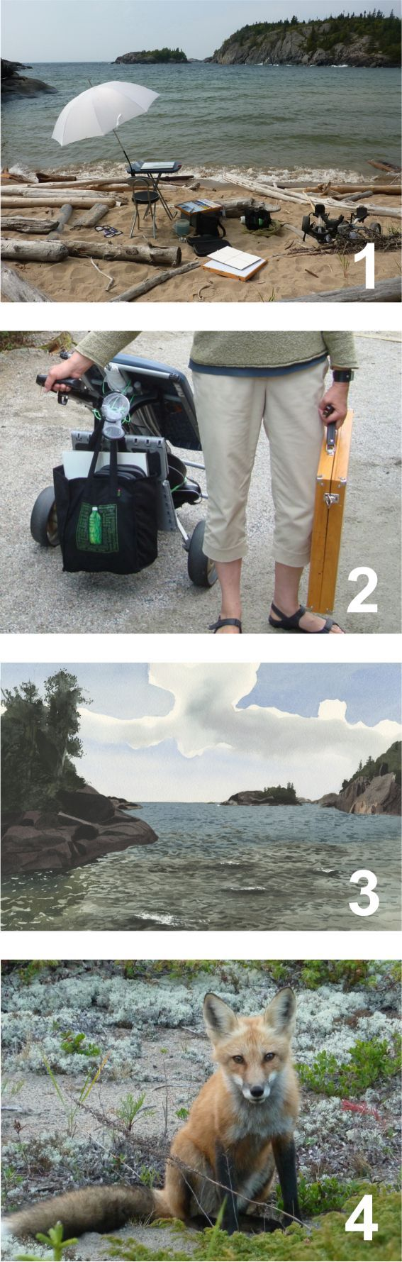 Plein Air Painting with Eva Bartel. A very beautiful spot to paint; Pukaskwa National Park, Ontario, Canada  1. the setup 2.transporting supplies on a golf cart 3.the watercolor 4.We spot a fox on the way back to the vehicle, plus fresh signs of a bear (yikes!)