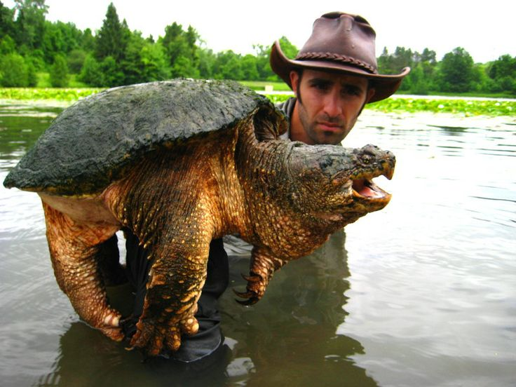 http://www.bing.com/images/search?q=Biggest Alligator Ever ...  http://www.bing...