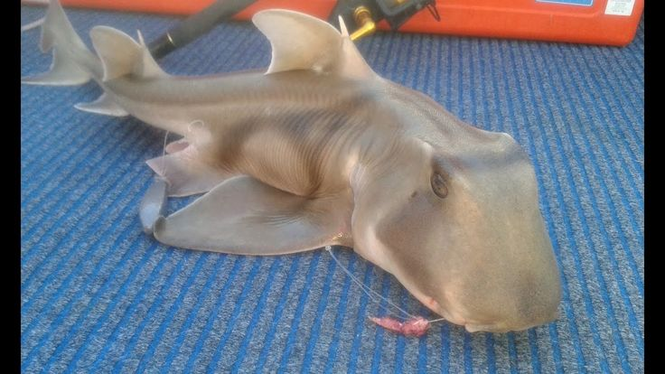 Unusual and Different Sharks Caught from the Indian Ocean Compilation