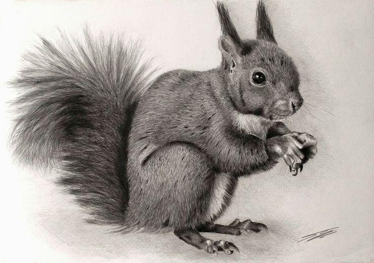 Giorgio Smiroldo The Squirrel Illustration Selected