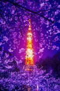 αcafe おりょりょさんのギャラリー 投稿日:2015年03月30日 撮影カメラ:SONY SLT-A77V