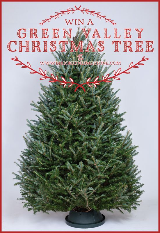 Giveaway: Win a Fresh Cut Christmas Tree!