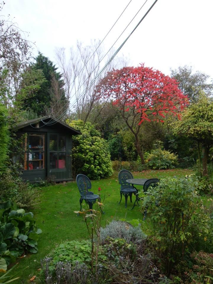 English garden - Cambridge - UK