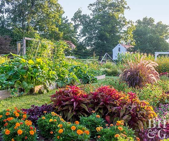Most people think of vegetable gardens as a plot of green, leafy plants in boring rows. But that doesn't have to be the case. You can grow edible plants in a vegetable garden design that rivals the beauty of any flower garden. In a relatively small space (roughly 20 x 20 feet), they grow mouthwatering fruits, vegetables, and herbs—as well as flowers.