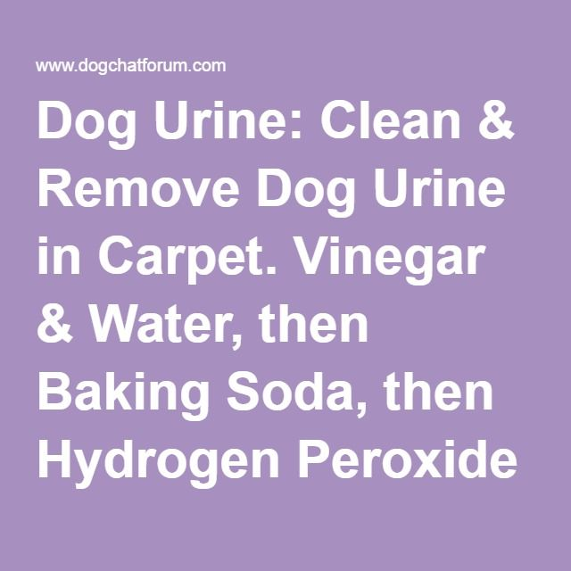 1000 Images About Hmmmm On Pinterest Dog Urine Summer