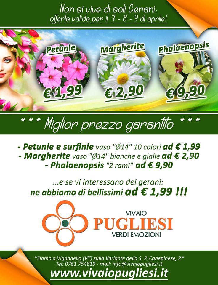 """Offerta valida per il 7 - 8 - 9 di APRILE:    - Petunie e surfinie vaso """"Ø14"""" 10 colori ad € 1,99  - Margherite vaso """"Ø14"""" bianche e gialle ad € 2,90  - Phalaenopsys """"2 rami"""" ad € 9,90   Vivaio Pugliesi - Il miglior prezzo di sempre!!!   *** G  A  R  A  N  T  I  T  O ***"""