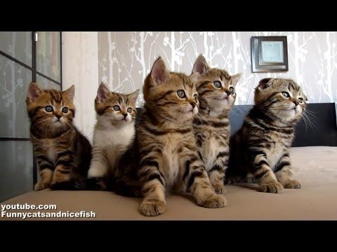 Dancing Kitten Chorus Line Is Mandatory Viewing