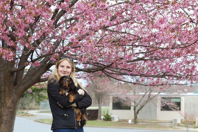 Dog Friendly Washington Dc The U S National Arboretum Delightful Dapple Cherry Blossom Dc Dog Friends Arboretum