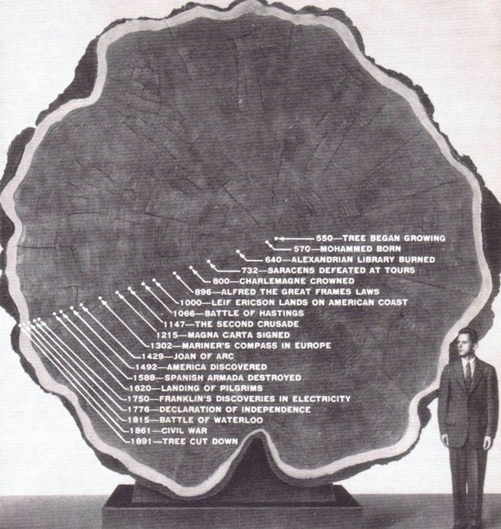 A cross-section of a 1341 year-old tree, using its concentric growth rings to show moments in history that have occurred over the course of its lifespan.