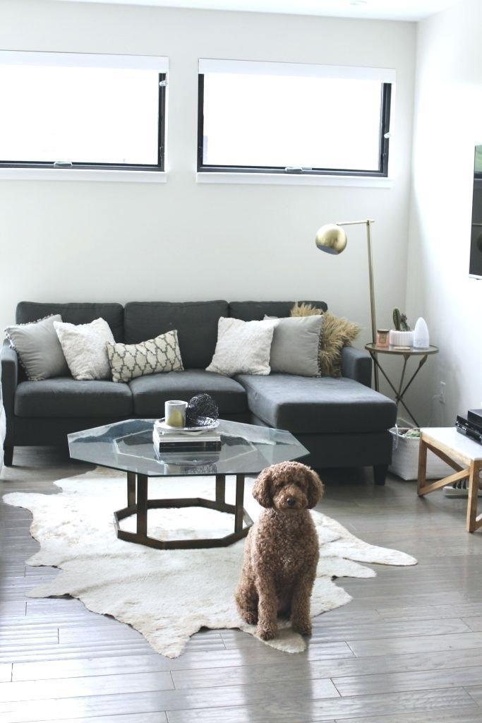 Animal Friendly Furniture Pet Friendly Living Room Modern Apartment Decor Minimalist Living Room