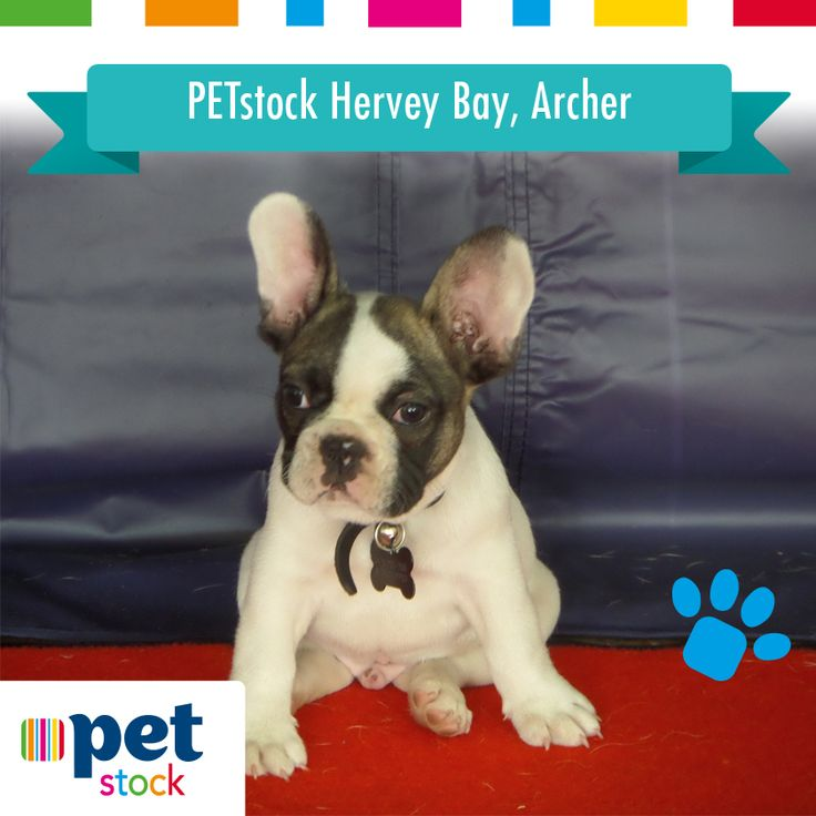 Archer the PETstock Hervey Bay winner