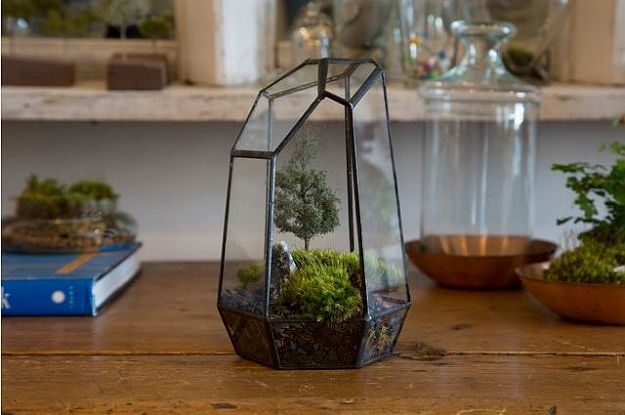 Mini Moss Terrarium | Terrarium Plants That You'll Love For Your Homestead