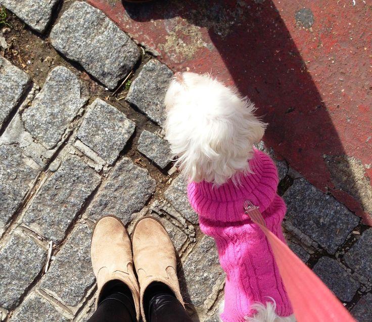 Con Perros y a lo loco | Vida perruna | Dogs & Lifestyle: Todo para ellos