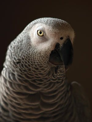 Pet Buzz: The eyes can be key to decoding a parrot