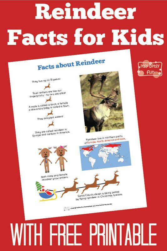 Fun Reindeer Facts for Kids plus Free Printables.