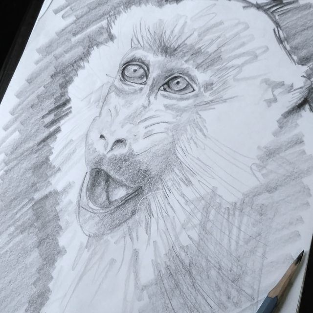 Sketch  from natgeo photography #mashudiarts . #monkey #drawings #sketchbook #sketch #instasketch #instadraw #draws #draw #pencil #pencildrawing #drawing #nationalgeographic #drawingpotrait #drawings #instaart #artwork #whpgoforgold #instagram  #like4like #companyofarts #artsy #artfido #bestdm #art_we_inspire #paintingswow #indonesia #deviantart #artgallery #artsdaily #instaartist