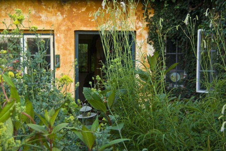 From the garden of Susan Trolle, Denmark, photo Sophia Callmer
