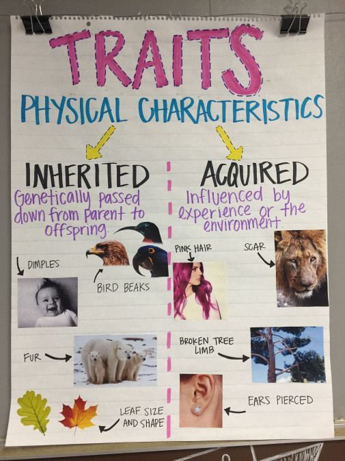 Inherited Traits Behaviors Anchor Chart Teachingbiology