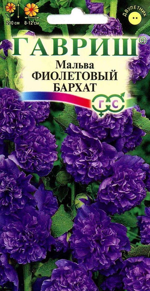 Семена «МАЛЬВА Фиолетовый бархат»