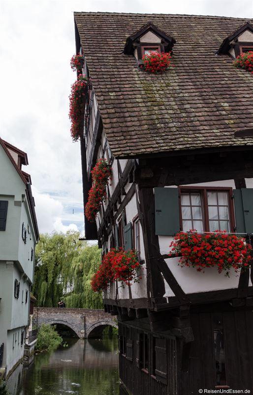 Stadtführung durch Ulm mit Highlights wie Rathaus, Münster, Fischerviertel. Dazu erkunde ich noch die Klosterbibliothek Wiblingen und den Blautopf.