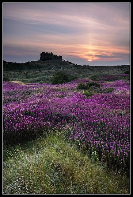 ✮ Purple Passion, UK