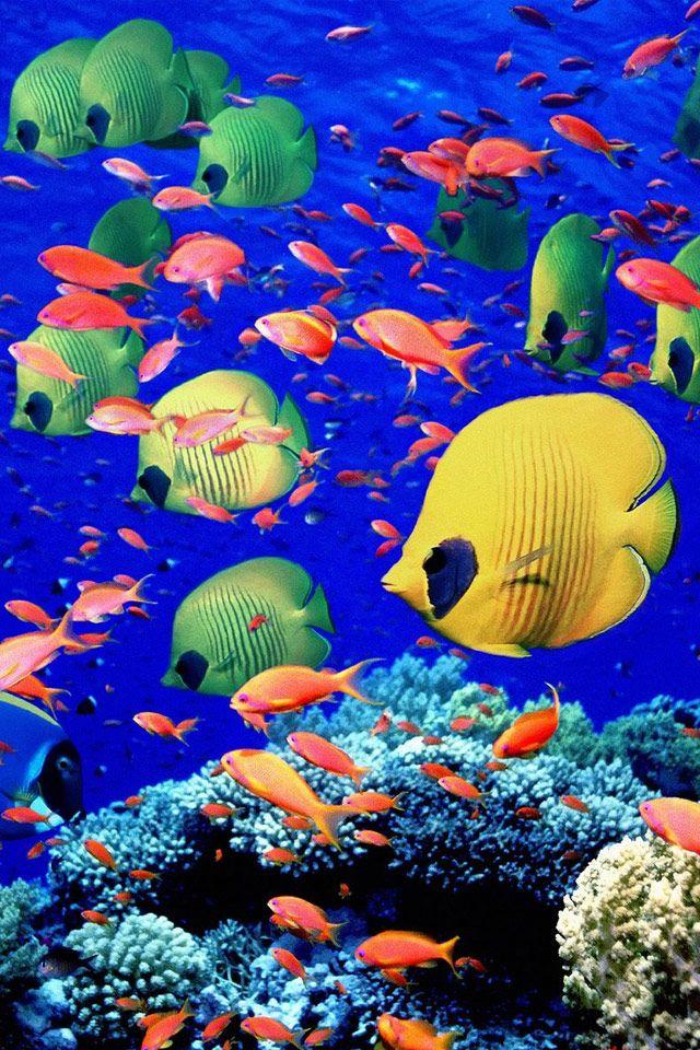 96 best iPhone Wallpaper Underwater images on Pinterest ...