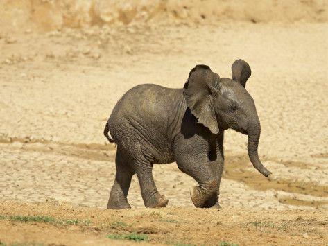 African elephant baby | African Elephant Babies