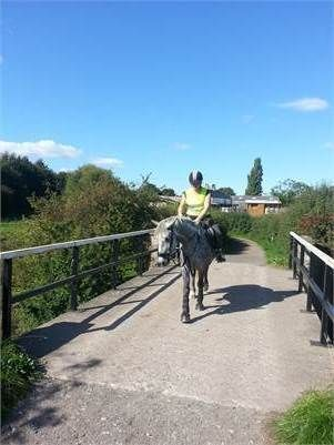 14.2 Dapple grey - cob for sale http://www.equineclassifieds.co.uk/Horse/cob-for-sale-listing-1124.aspx#.VHnG-WcTCZY