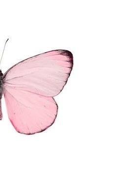 rosa fjäril