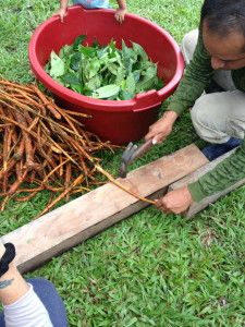 Blog on Ayahuasca Plant Medicine That Heals Emotional, Mental, Physical and Spiritual Issues