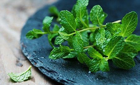 Die Pfefferminze ist ein bewährtes Heilmittel bei Kopfschmerzen, Erkältungen und Magen-Darm-Verstimmungen. Pfefferminz hilft gegen das Reizdarm-Syndrom, das ätherische Pfefferminzöl gegen Kopfschmerz und eine Pfefferminz-Inhalation bei verstopften Atemwegen. Ein Pfefferminztee wärmt im Winter und im Sommer erfrischt die aromatische Pflanze mit einem köstlichen Pfefferminz-Smoothie. Hier finden Sie zahlreiche Tipps zum Einsatz der Pfefferminze!