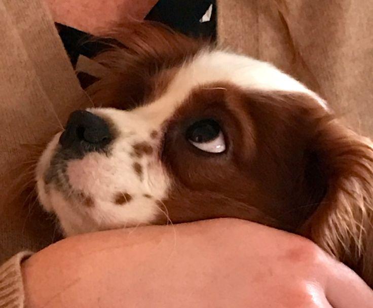 Il solo posto al mondo in cui si può incontrare un uomo degno di questo nome è lo sguardo di un cane (Romain Gary)