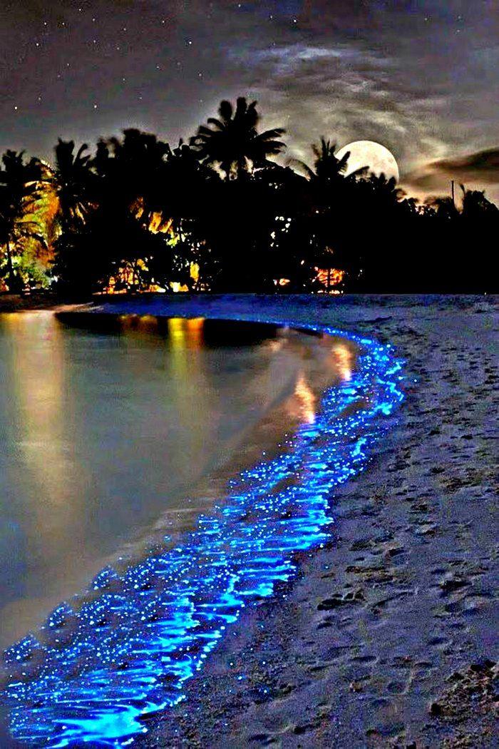 Σε μια παραλία του πανέμορφου νησιού Βαντού, που αποτελεί τμήμα της ατόλης Raa Atoll στο αρχιπέλαγος των Μαλδίβων στον Ινδικό ωκεανό, συμβαίνει κάτι πραγματικά μαγικό μόλις πέσει το σκοτάδι!        Το Βαντού είναι ένα πολύ μικρό νησί