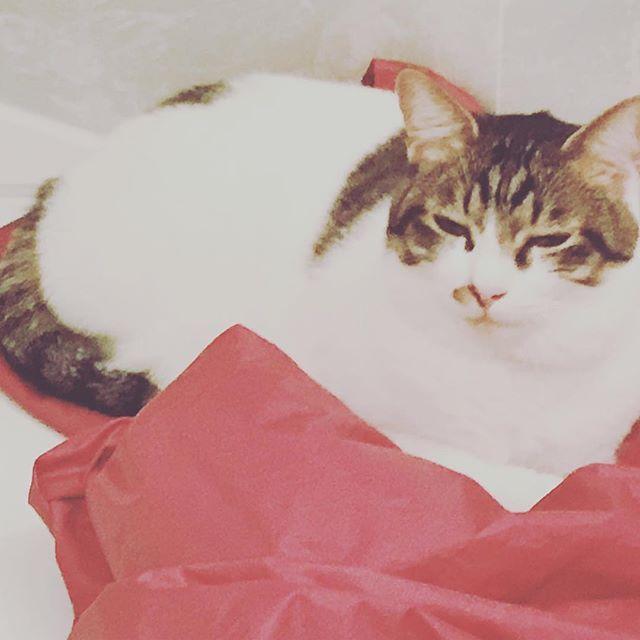 換気扇でカッパを乾かして片付け中に目を離したら... お風呂の準備が出来ないよ😭  30分は余裕で丸くなって寝てた…  #どいてくれ #準備 #邪魔猫 #寝ないで #30分 #悲しい #お風呂 #目を離したら #カッパ #赤 #猫 #愛猫 #猫好き #猫好き部 #猫好きさん #猫好きさんと繋がりたい #可愛い #癒し猫 #大好き #猫大好き  #ゆったり #のんびり #フォロー #フォロバ #フォロバ100 #フォロバ絶対