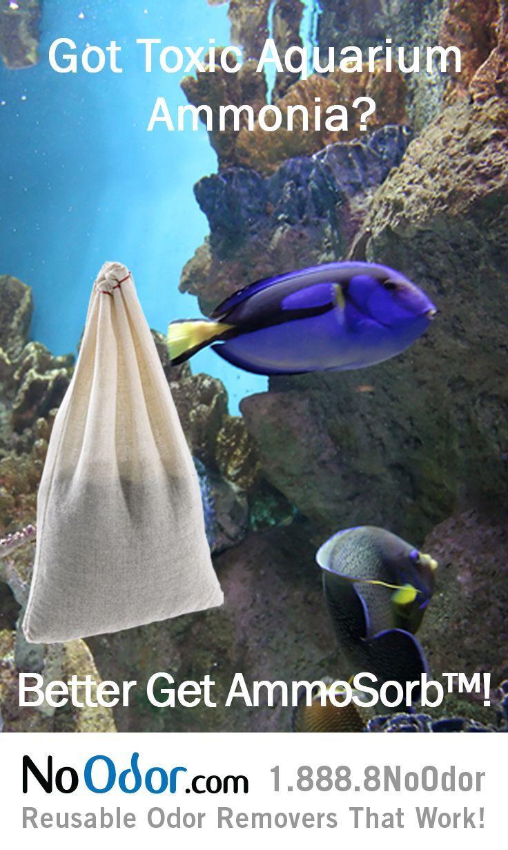Killer freshwater aquarium fish - Ammosorb Fish Tank Ammonia Removal Granules Eliminates Toxic Ammonia The 1 Killer Of Fish This Also Reduces Stress Disease In Fish