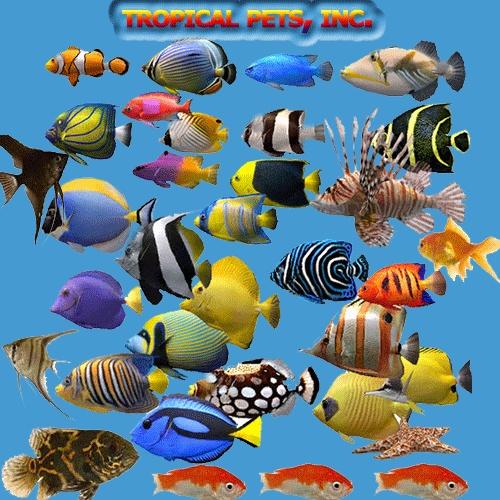 Pictures of pet store aquarium best fish aquariums for Fish tank fish types