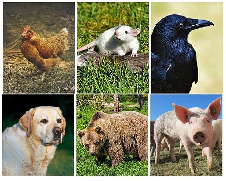 Characteristics Of Herbivores, Carnivores And Omnivores