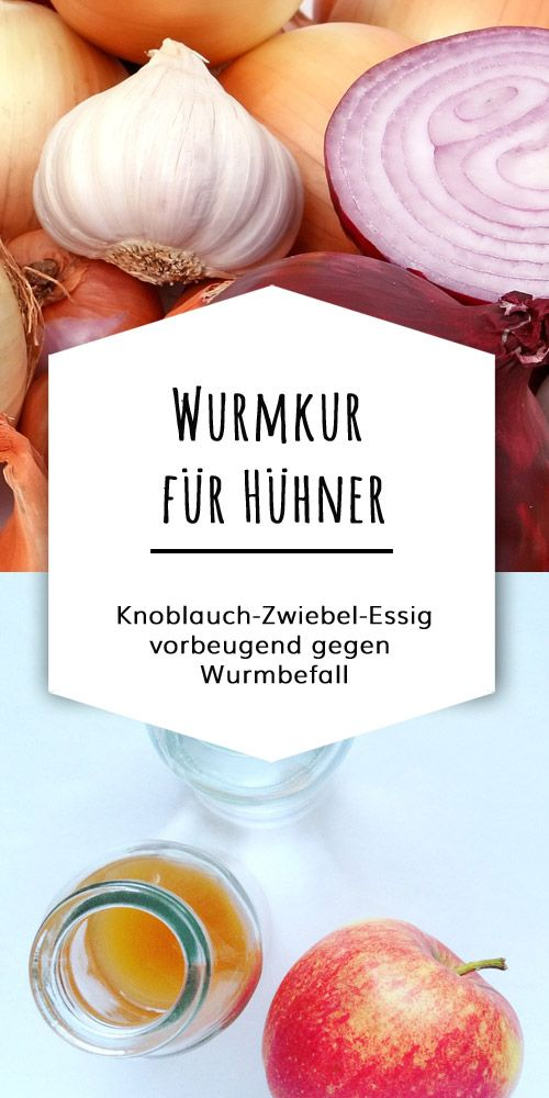 knoblauch zwiebel kr uter wurmkur f r h hner j hrlich essig und h hner. Black Bedroom Furniture Sets. Home Design Ideas