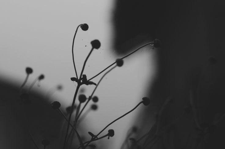 https://flic.kr/p/BaaRu1 | autunno