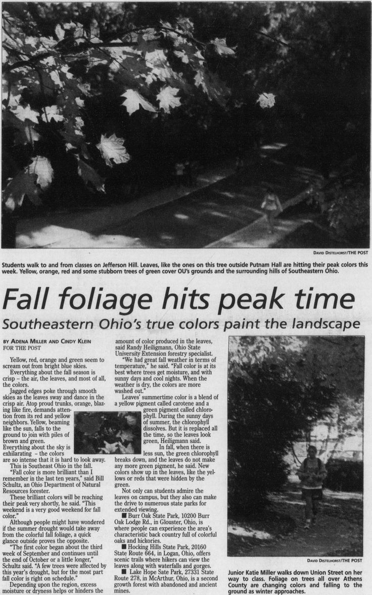 Yellow jackets in ground in winter ohio - Post Athens Ohio October 22 1999 Page 1 Fall Foliage